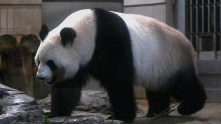使ってませんがパンダ。もう一頭はお昼寝中…。